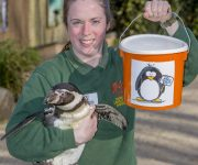 Raising funds for penguins