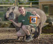 We're talking tapirs!