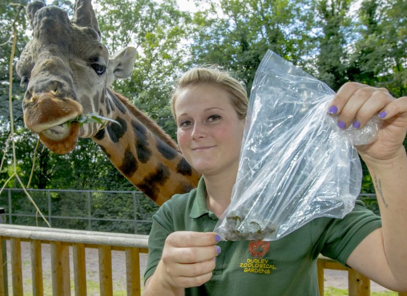 DZG giraffe poo research