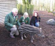 USA expert meets tapirs