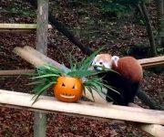 Halloween pumpkin playtime