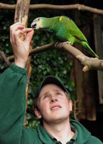 Rare Amazon parrots fly into DZG