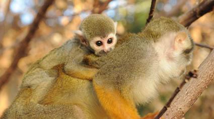 Cheeky monkeys settling in