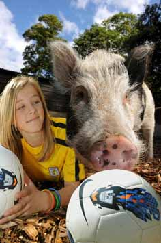 Micro pig, Harley, is football crazy