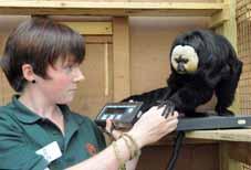 Weigh-in highlights monkey tricks