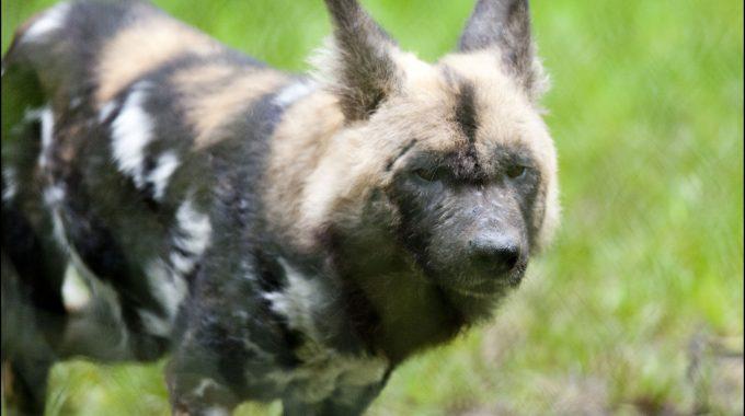 DZG_Adopt_Hunting_Dog3