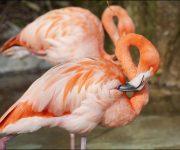 DZG_Flamingo_3