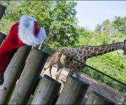 Santa booking's open!