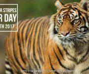 Tiger awareness