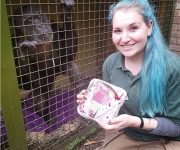 Chimps' post-festive boost