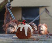 Make festive food fair