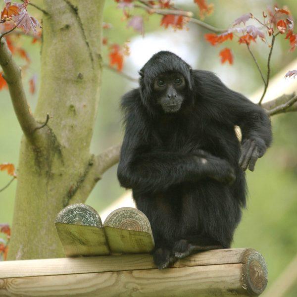 Monkey Spider Valentine Photo