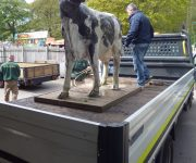 Daisy moo-ves off site!