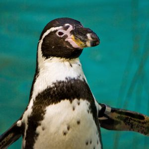 Penguin Dippy Photo