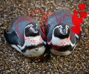 DZG animals help woo valentines!