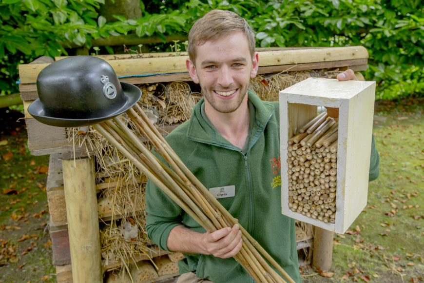 Bamboo canes from cannabis factories for bug hotels
