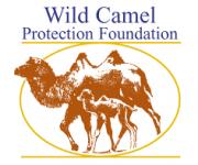 Celebrating camels
