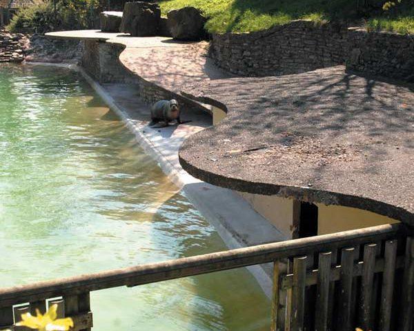 sealion-pool