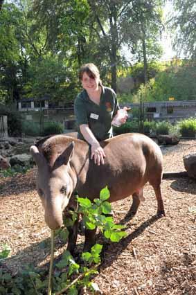 Tapirs' skins stays baby soft