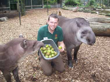 Tapirs' tasty treats