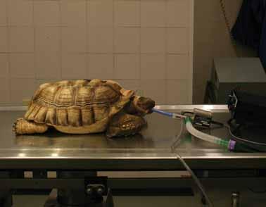 Operation leaves tortoise, Ernie, shell-shocked