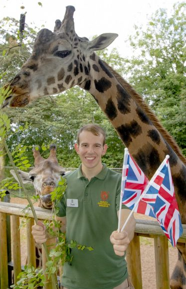 DZG giraffes and union flags