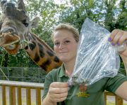Giraffe poo aids research