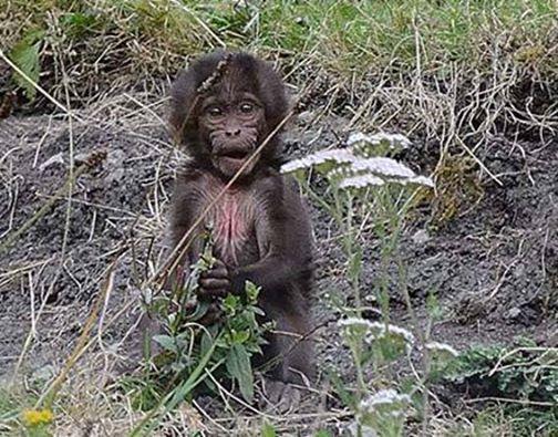 dzg_bill_oddie__baboons_web