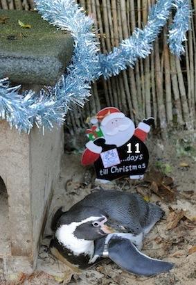 11_penguins_2