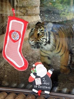 2_tiger_stockings