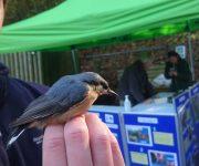 Successful bird ringing