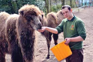 DZG-camels