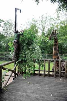 DZG-feed-giraffe-web
