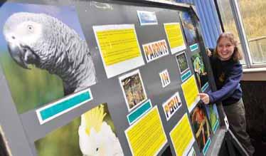 Plight of Parrots exhibition
