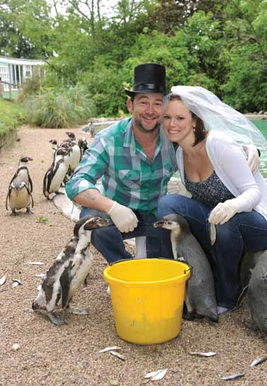 Penguins set wedding theme