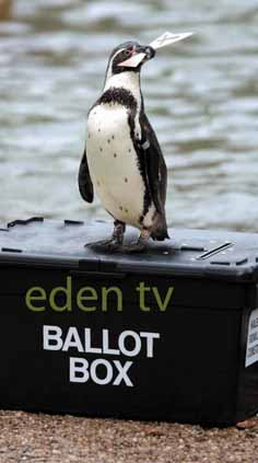 Vote to win with Eden TV!
