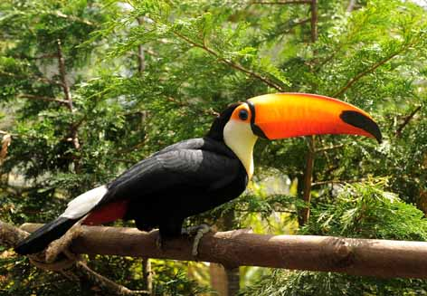 Toucan flies into DZG
