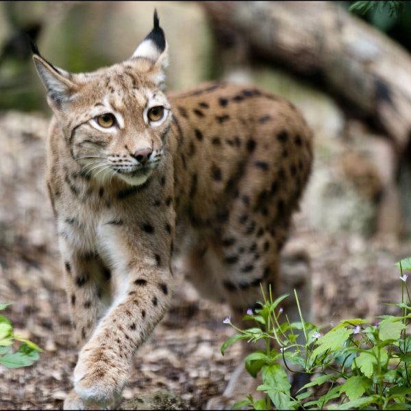 Dudley Zoological Gardens  Picture by Jason Skarratt