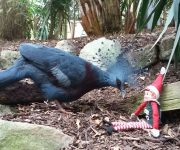 Elf discovers a new arrival!
