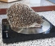 Tipping the scales!