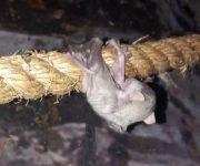 Bat baby boom