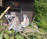 Exploring lemur twins