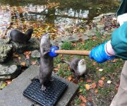 Otter training on target