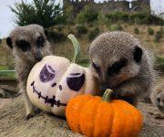 Pumpkin playtime