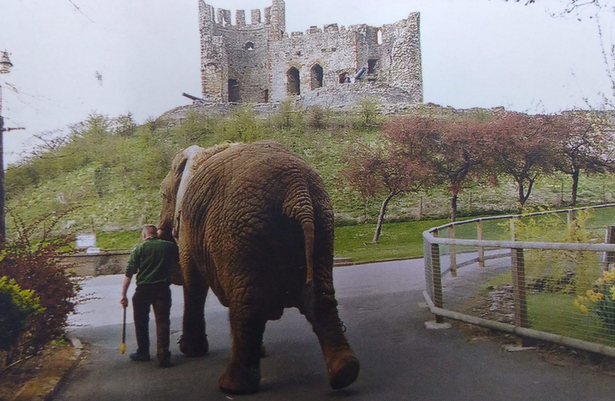 Throwback Thursday Dudley Zoological Gardens