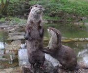 Otterly gorgeous!