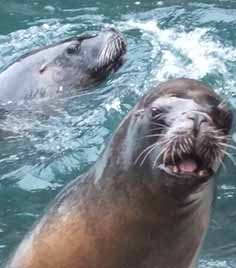 Meet the sealions