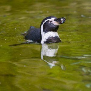 Penguin Dave Photo