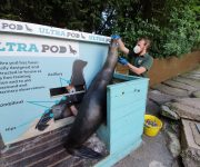 Sterling work with sea lions