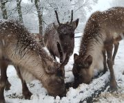 Reindeer mean snow business!